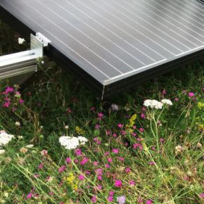 Bauder's BioSOLAR PV mounting system