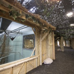 The new Gibbon Forest, at Twycross Zoo will be home to four groups of gibbon: Siamang, Northern White-cheeked Crested gibbon, Agile gibbon and Pileated gibbon.
