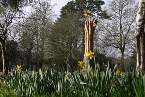 Daffodils small 2