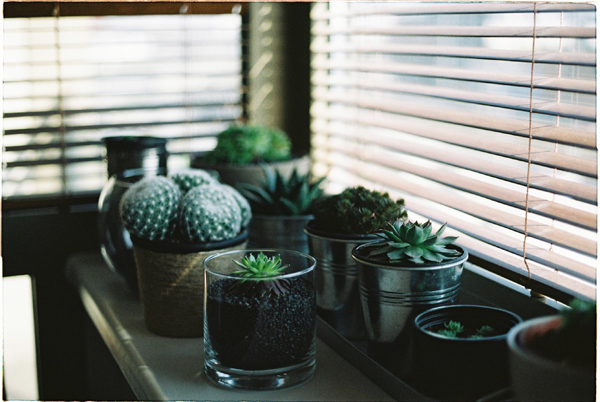 image-3-office-plants